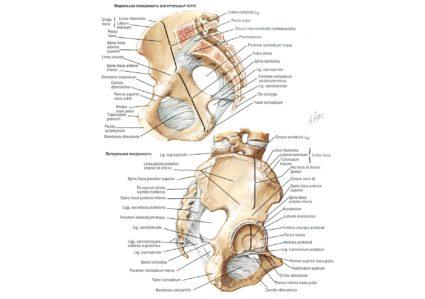 Изображение - Суставов женщины мужчины anatomy166-425x299