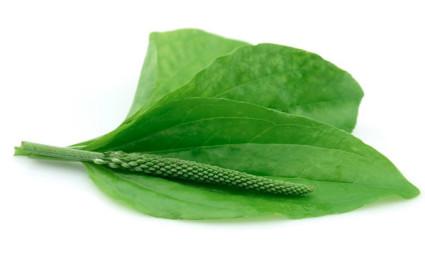 Лечение суставов при помощи растений и трав