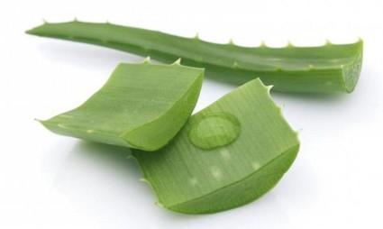 Можно приготовить мазь из листьев алоэ