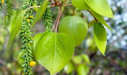Дары природы для лечения недуга
