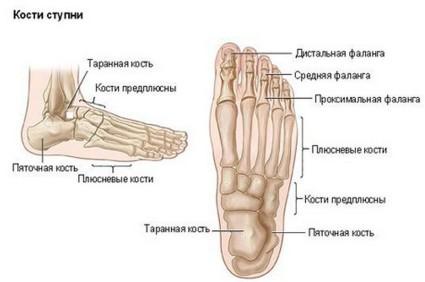 Структура ступни