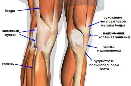 Связки колена необходимы для его надежности и прочности