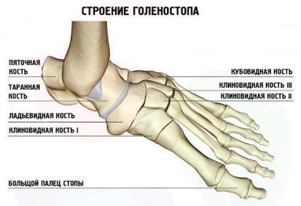 Наши ноги