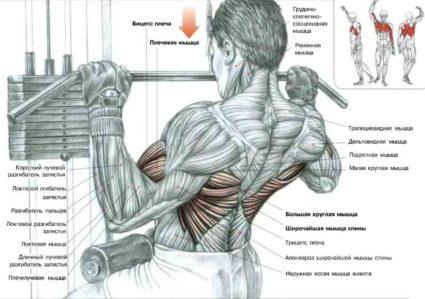 Глубокие мышцы отвечают за то, чтобы позвоночник был здоров