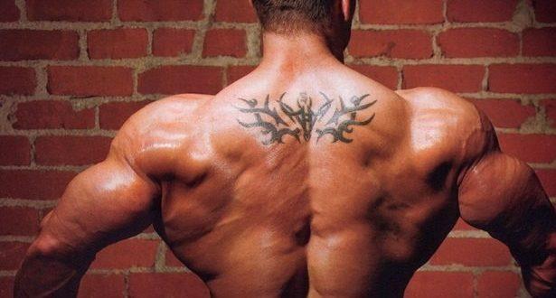 мышц спины