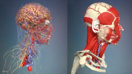 В шейном отделе позвоночника берет начало спинной мозг