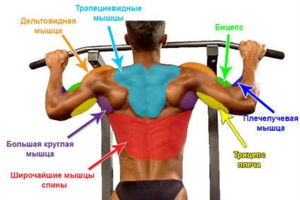 Для многих из них область спины и шеи кажется не столь важной