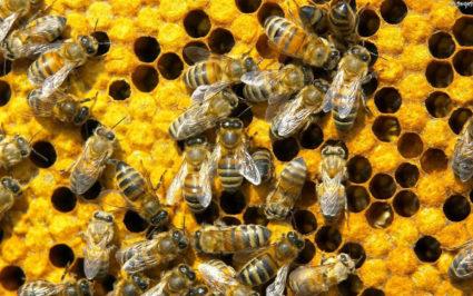 Укусы насекомых могут серьезно воздействовать на организм человека