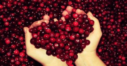 Все то, что растительного происхождения, – кладезь несметного количества витаминов