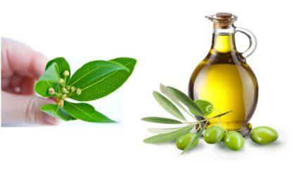 Лавровый лист и оливковое масло