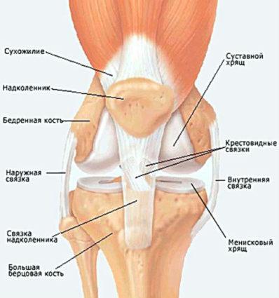 Нервы в колене