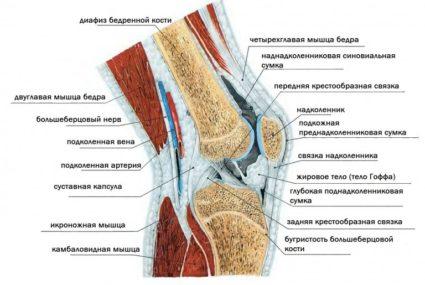 Мениск-прокладка между основными костями