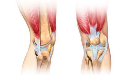 За счёт мышц,нога сгибается и разгибается