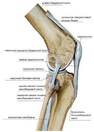 Коленный сустав болит при сгибании - значит есть проблемы