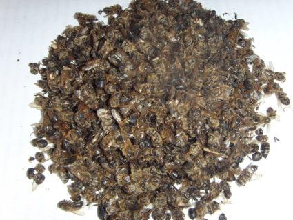 Препарат «Софья», сделанный на основе яда пчелы