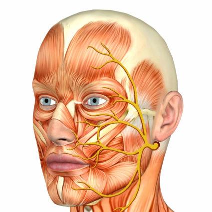 Тройничный нерв, особенности его строения и рефлексов