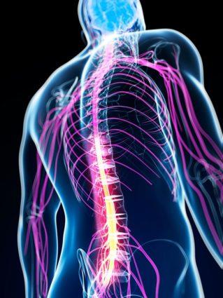 Кровеносная система организма питает каждую клетку кислородом