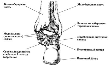 Подтаранный сустав