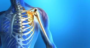 Плечевой сустав: анатомия