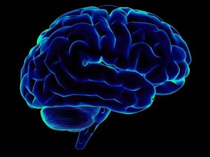 Мозговая масса человека зависит от возраста, пола, особенностей индивида