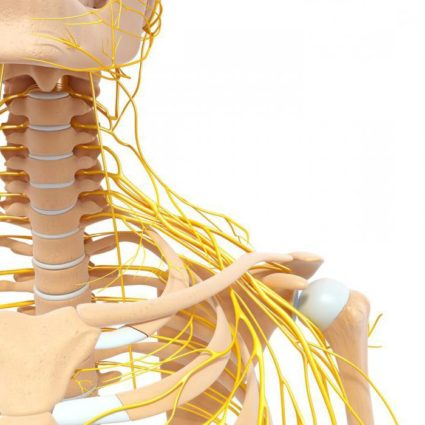 Воспаления корешков нервов,это радикулит