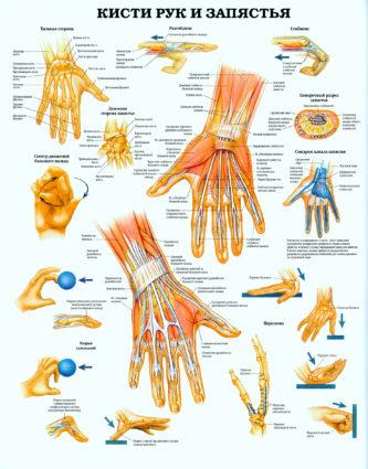 Рука – посредник между человеком и окружающим миром.