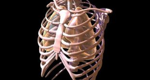 Защита основных органов человека