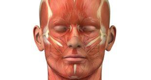 мышцы шеи анатомия