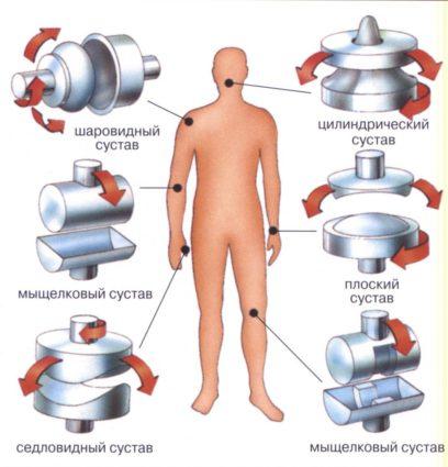 Соединение костей и суставов человека
