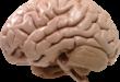 Мозг человека позволяет думать, дышать и решать любую задачу
