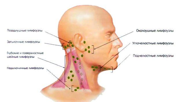 фото черепе