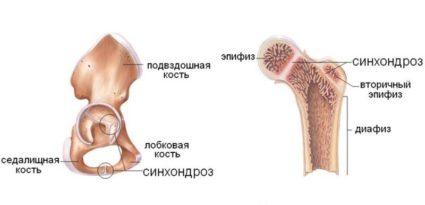 Кости скелета человека соединены очень крепко