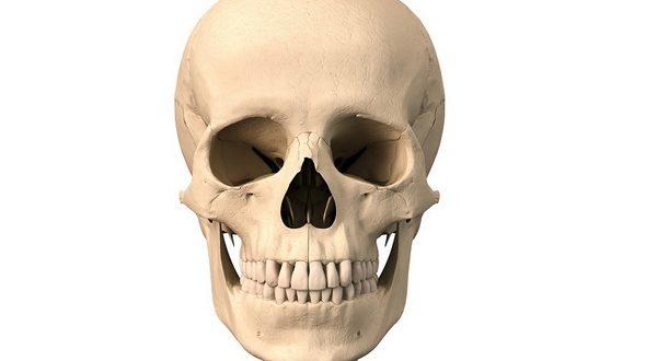 Важно знать как устроены наши кости
