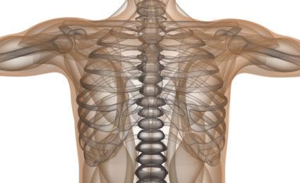 Ребра защищают сердце и легкие