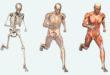 Как устроено наше тело
