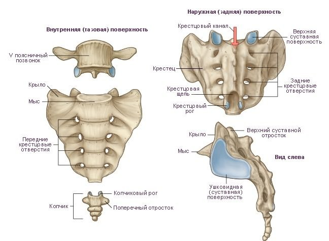 Sacrum and coccyx x ray positioning
