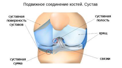 Соединение сустава
