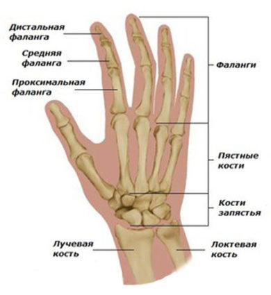 Выбил сустав пальца что делать ортез на коленный сустав тутор
