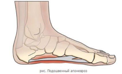 Апоневроз стопы