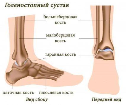 Схема голеностопа